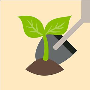 Semillas y materiales