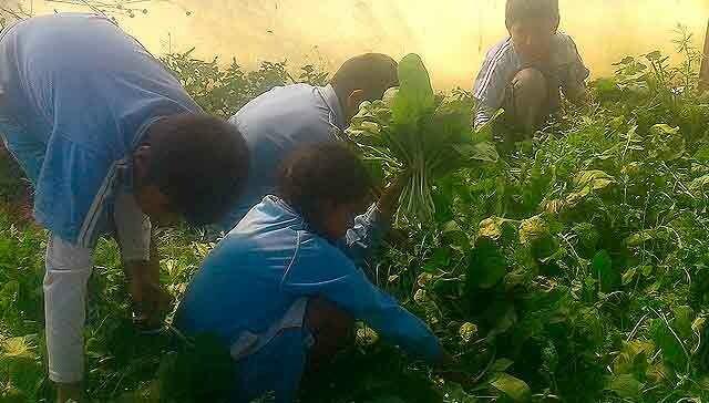 393313248153437834-bolivia-biohuertos-cosecha.jpg