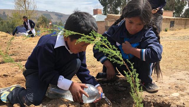 699208445228058490-bolivia-reforestacion-1.jpg