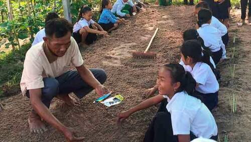11727515686016804-camboya-huerto-samor-seguimiento.jpg