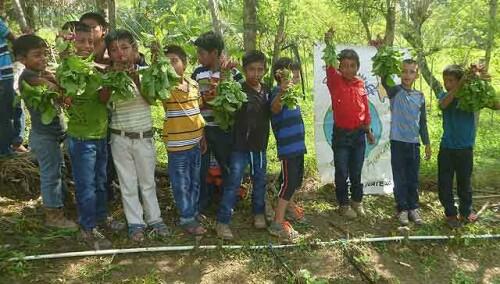 102034009122943704-guatemala-cosecha-huertos-1.jpg