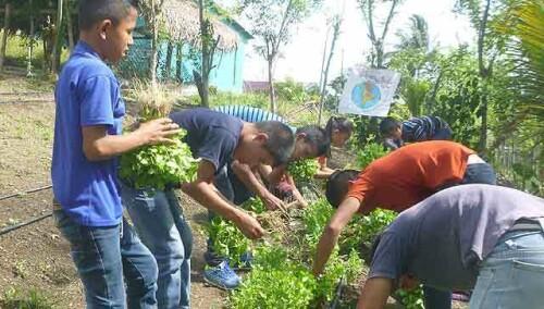 29983387517176805-guatemala-huertos.jpg